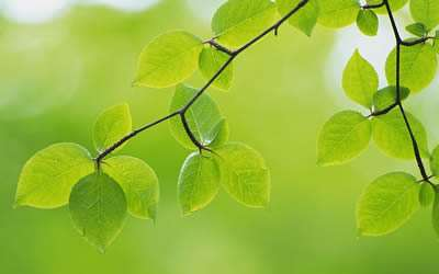 wallcoo_com_2560x1600_Widescreen_GreenLeaves_wallpaper_da035019e.179211148